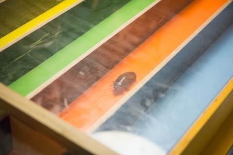 Фото Мышиные бега